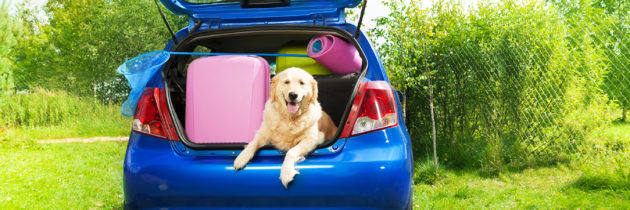 Auto Maintenance Tips Before Your Summer Vacation